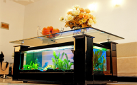 Table basse aquarium en situation